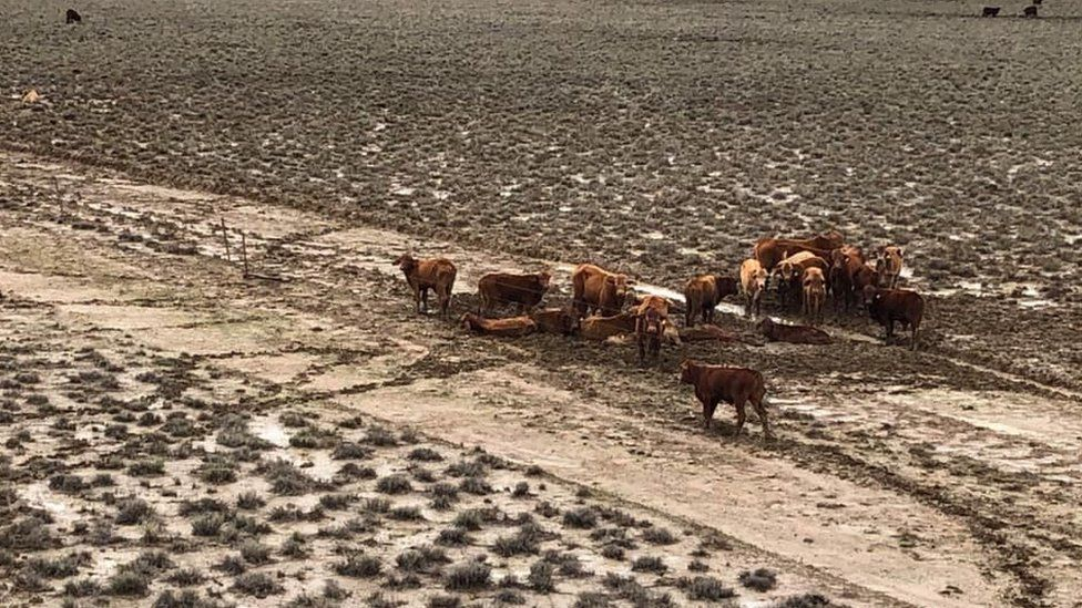 A group of cattle huddle together on Rachel Anderson's farm in Julia Creek