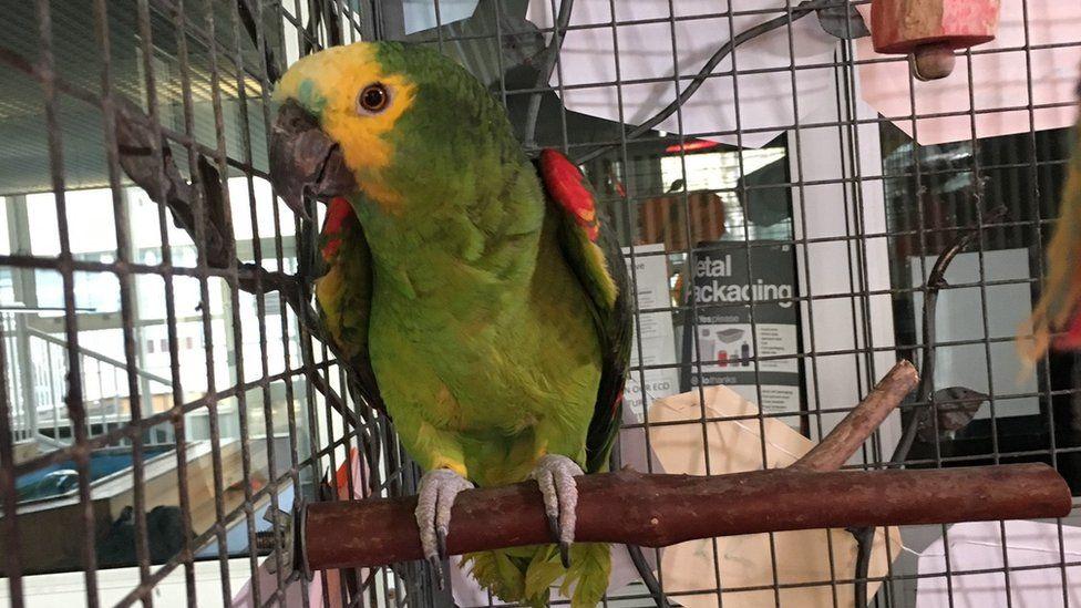 Sim the parrot