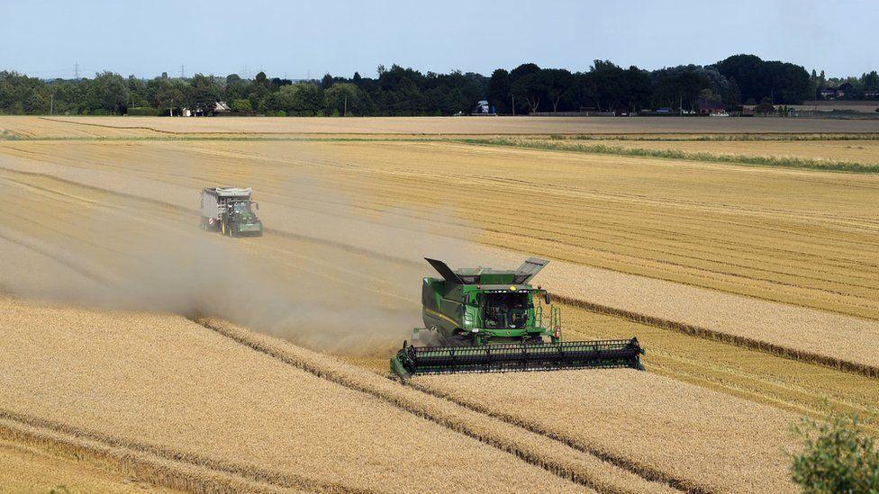 A combine harvester in Norfolk