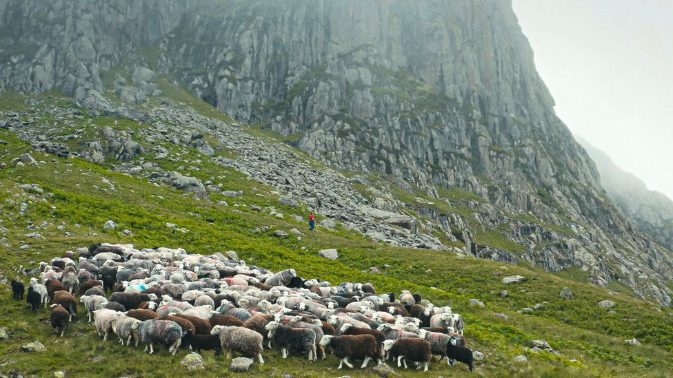 In BBC Four's The Great Mountain Sheep Gather we see a shepherd reflecting on life while caring for his flock