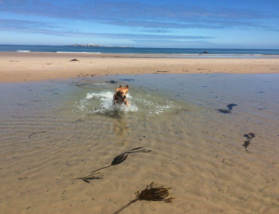A dog splashing in water