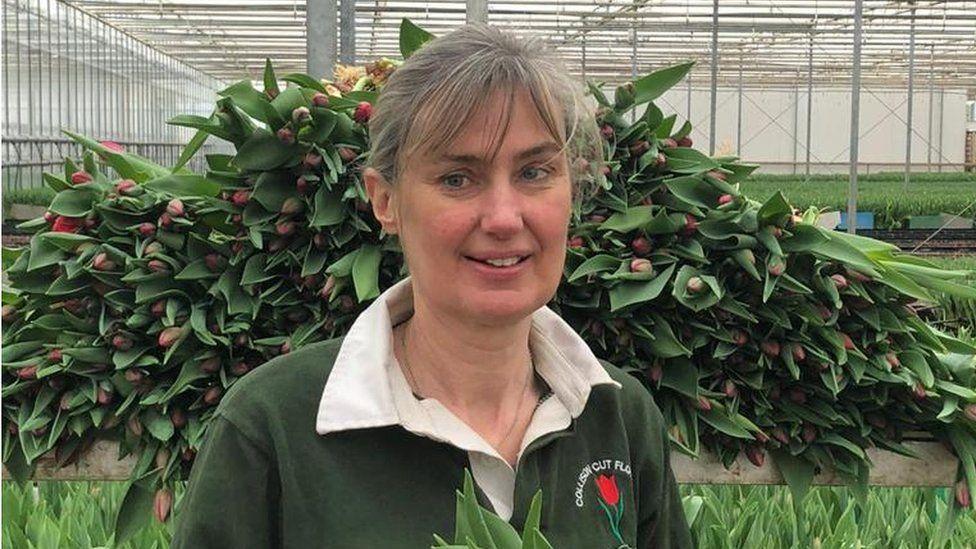 Diane Collison
