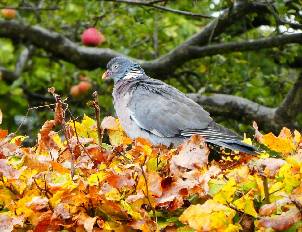 A pigeon on leaves