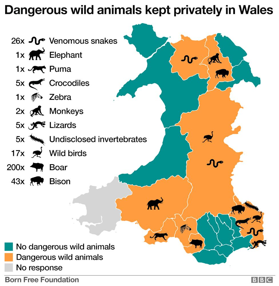 Map Of Australia Dangerous Animals.Five Crocodiles In Monmouthshire Dangerous Animal Hotspot Bbc News