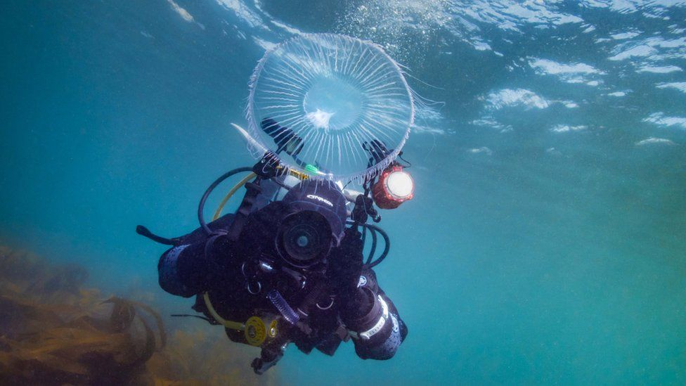 Georgie Bull underwater taking photo of jellyfish