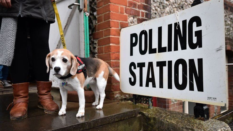 A dog outside a polling station