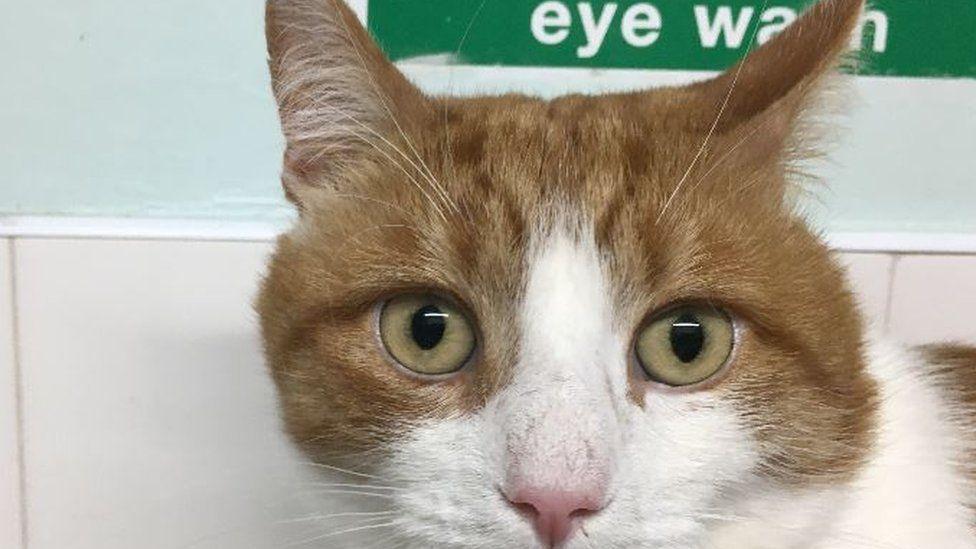 Seized cat