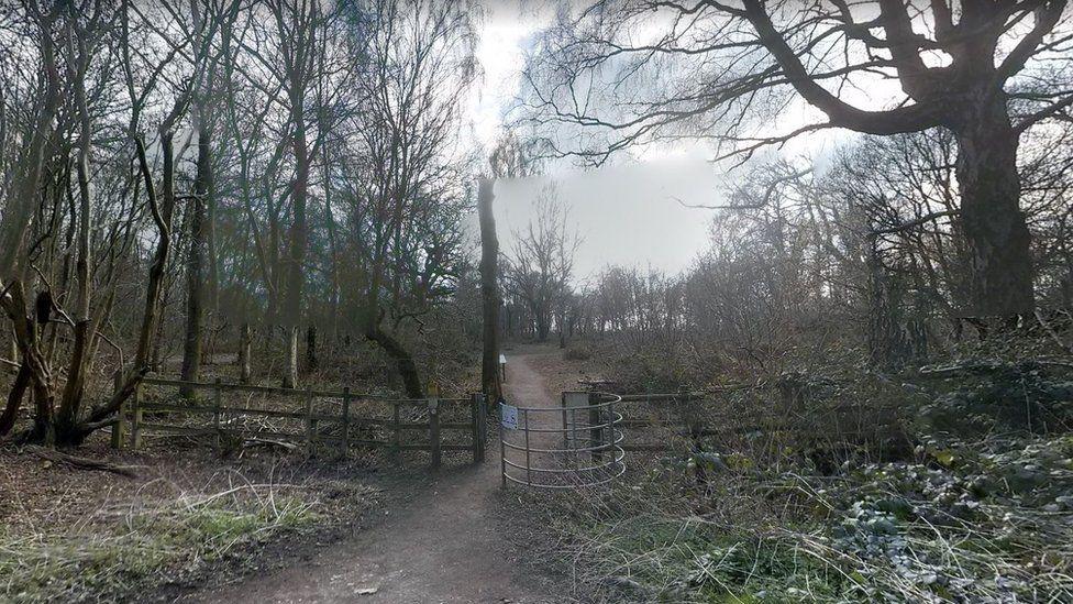 Crackley Woods, Warwickshire