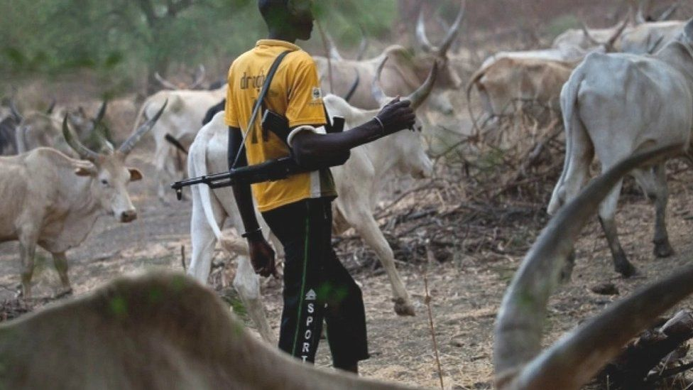 A Funali herdsman escorts his cattle with a gun on his shoulder