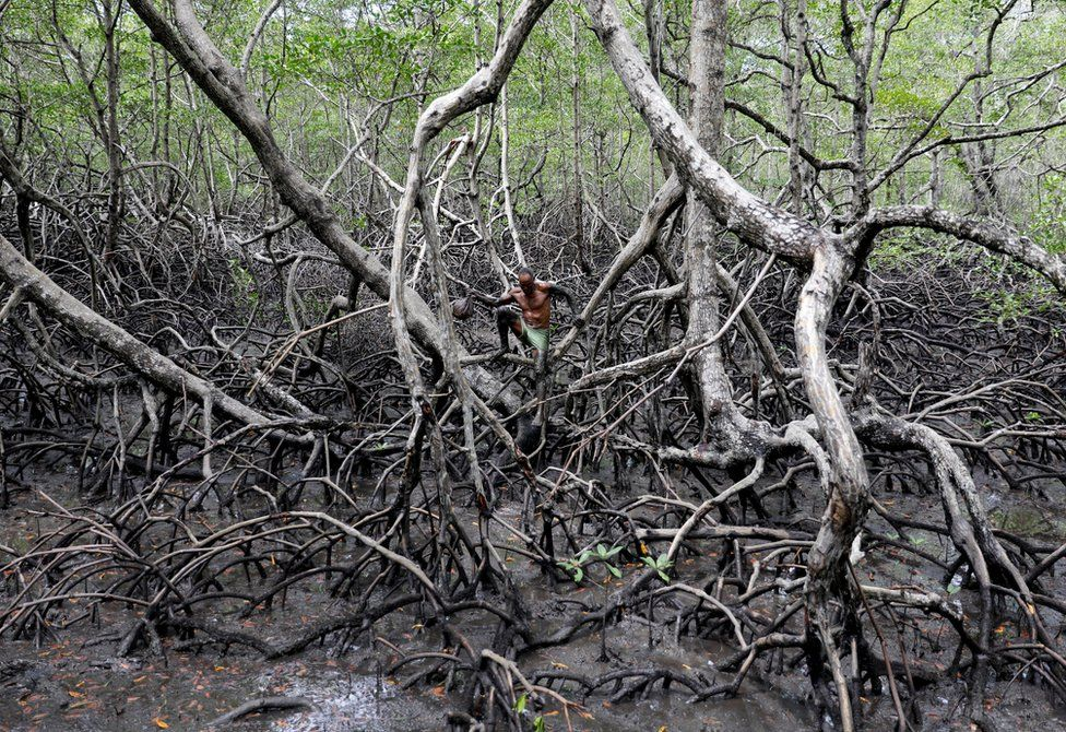 Fishing for crabs in Brazil's mangrove forests