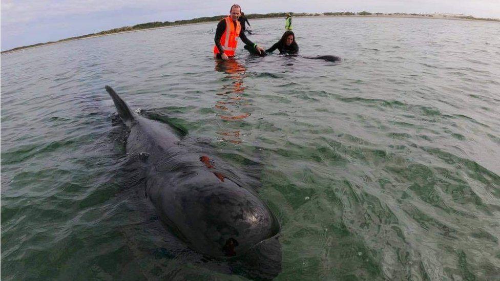 Refloating whale