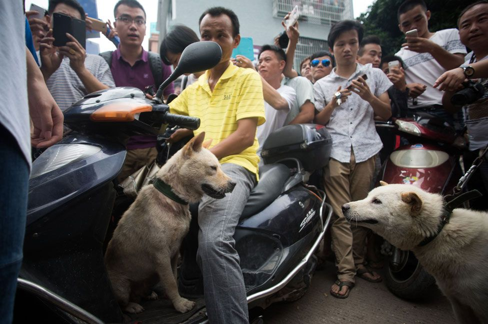 Dogs for sale in Yulin