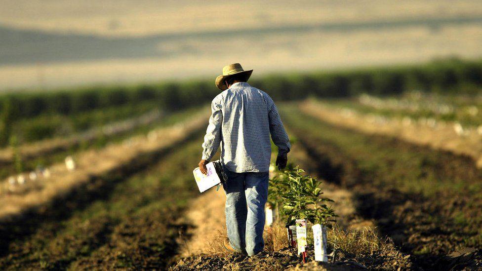 Farmland, California