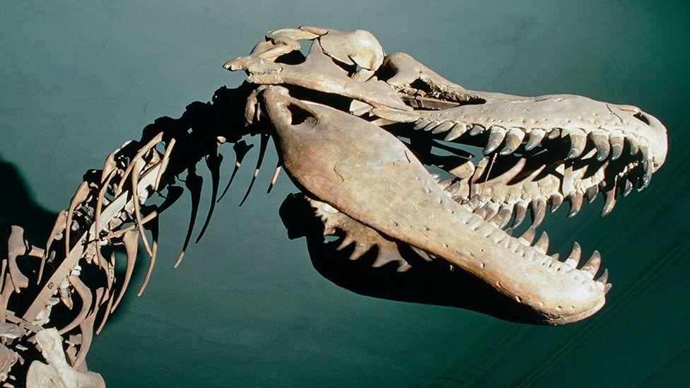 Mongolian dinosaur