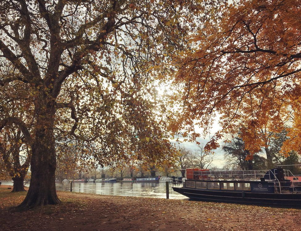 A boat on water under an autumnal tree