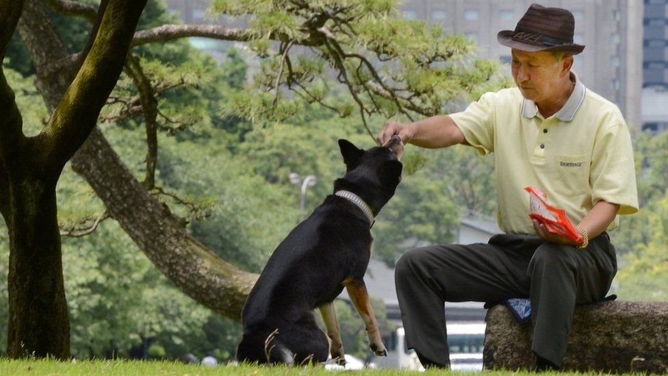 An elderly Japanese man feeds his dog in a park