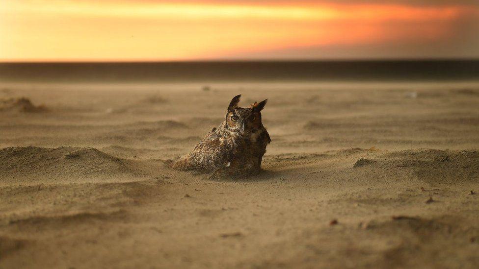 An owl nestled in the sand on the beach