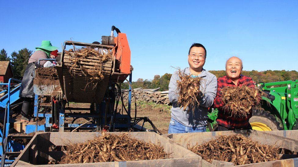Ginseng famers Will and Paul Hsu