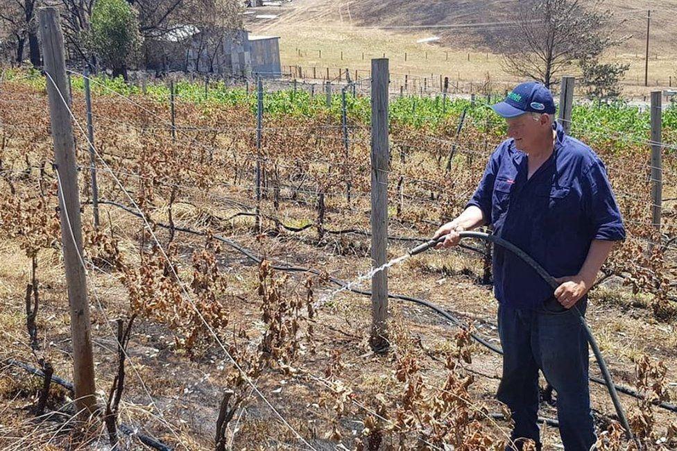 James Tilbrook watering burned vines