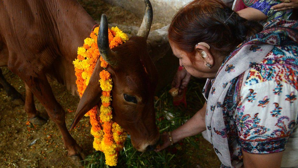 Many Hindus consider cows sacred