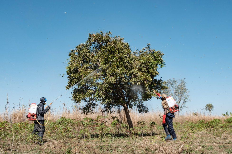 Soldiers spray trees with insecticides