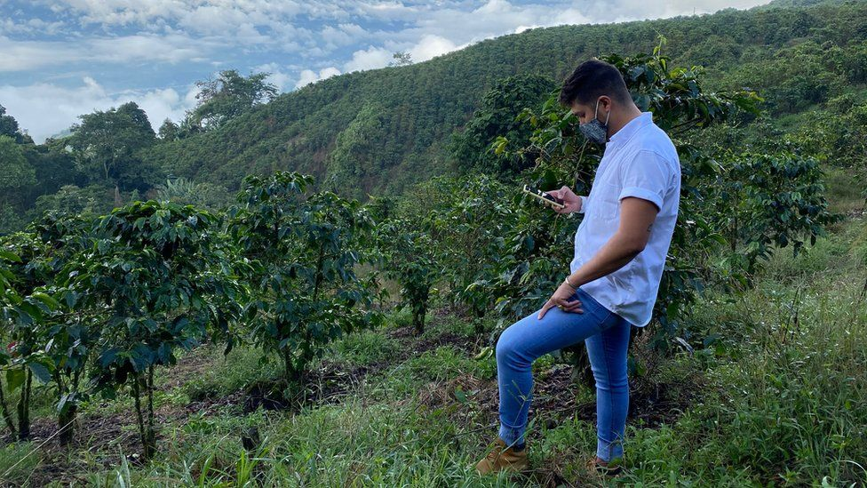 Ángel García, one of the managers at the Santa Isabel estate, overlooks a slope carpeted with coffee bushes on Nov 20. The farm has 900,000 bushes.