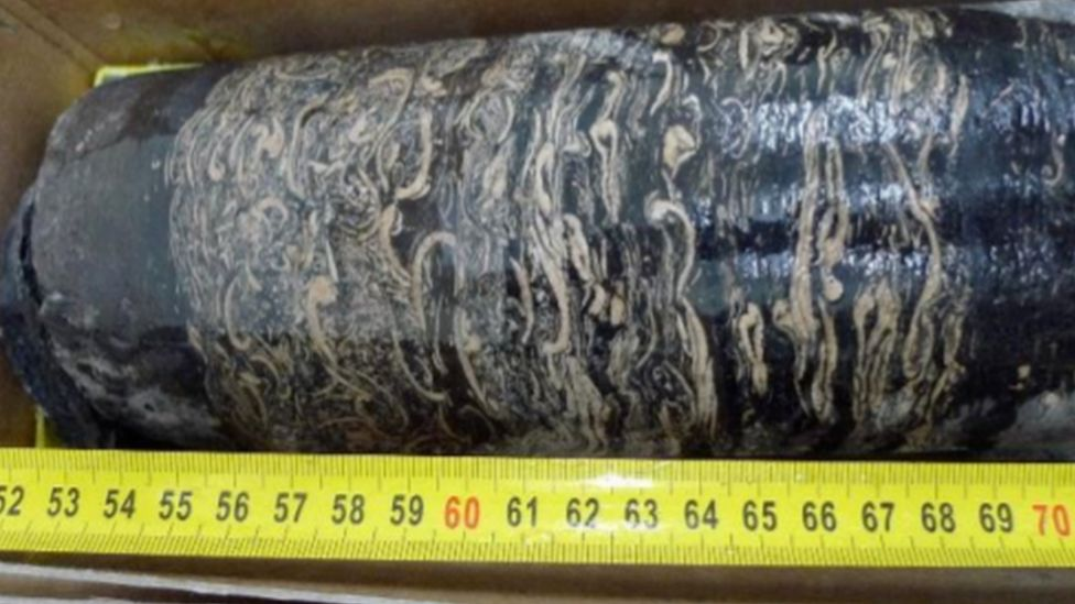 mussel fossil