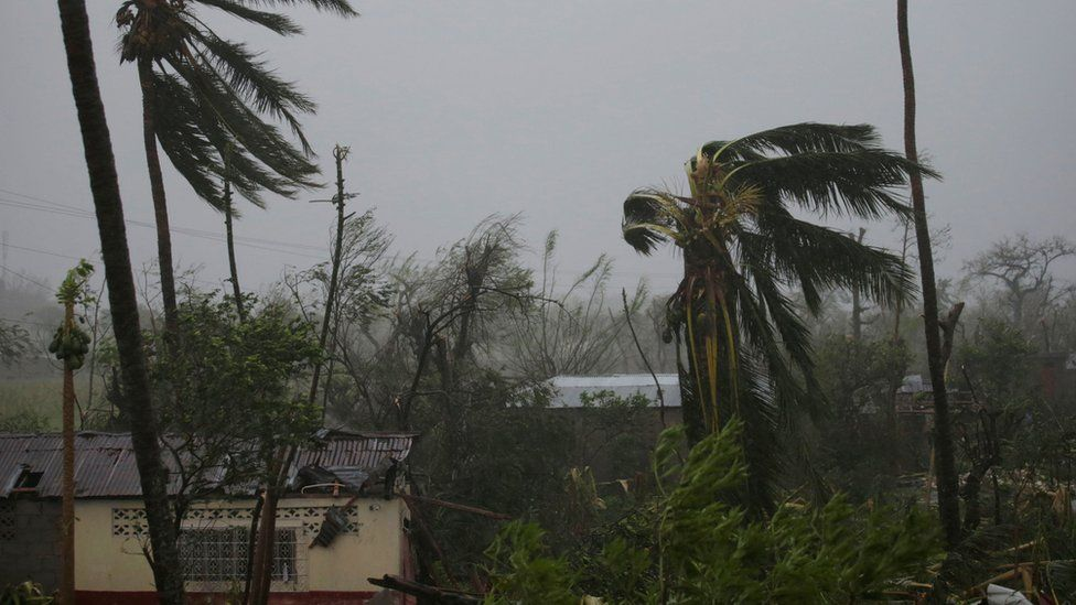Trees damaged by wind are seen during Hurricane Matthew in Les Cayes