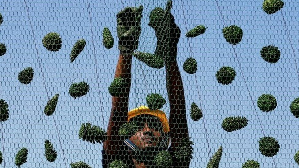 A construction worker prepares the huge Christmas tree in Colombo (05 December 2016)