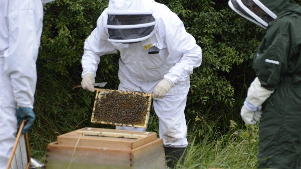 Beekeepers in black bees