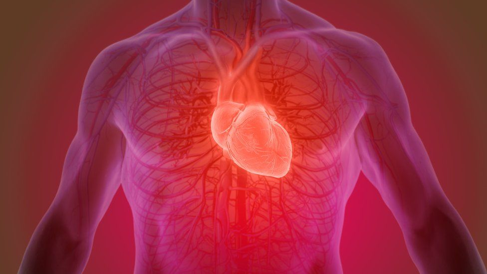 The heart inside a man