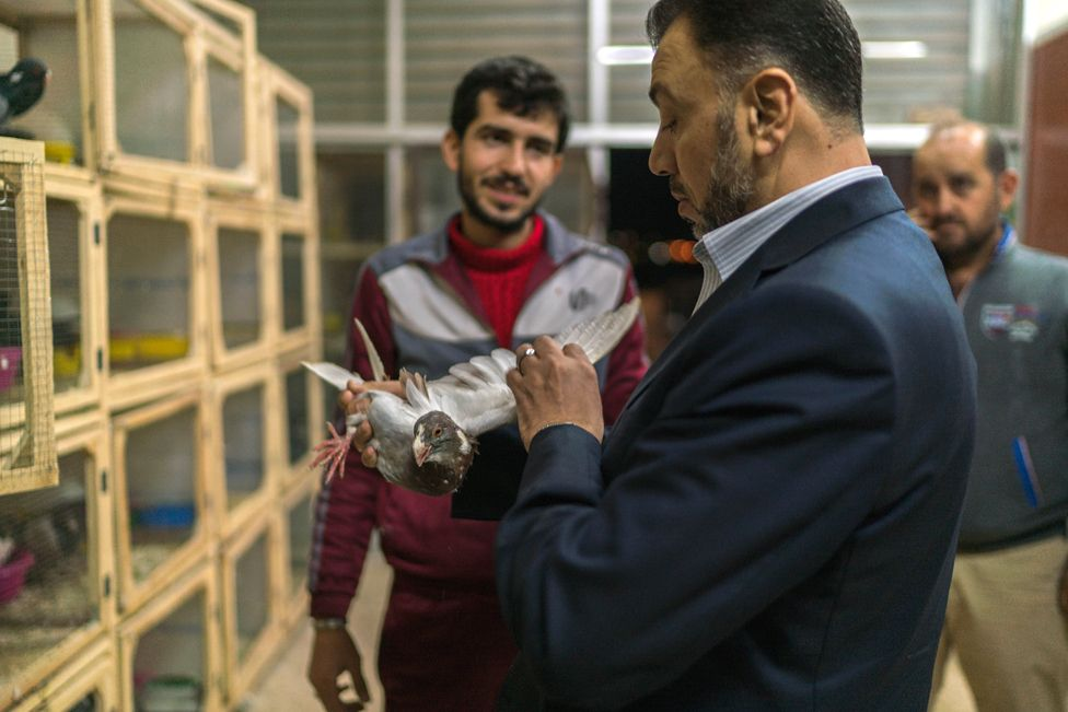 Nasser al-Hindi inspecting a bird's wings