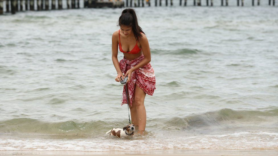 A woman walks her dog at Port Melbourne Beach on January 15, 2019 in Melbourne, Australia. Heatwave conditions are expected across the country this week with temperatures expected to reach the mid 40s in some areas
