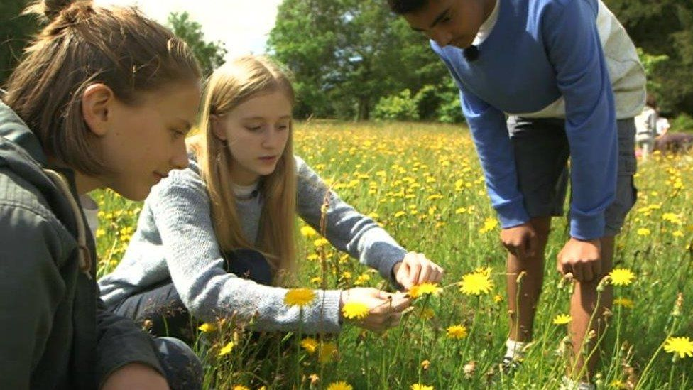 Young people observing flowers