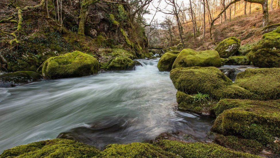 Wales' Celtic rainforests in £6.5m restoration project