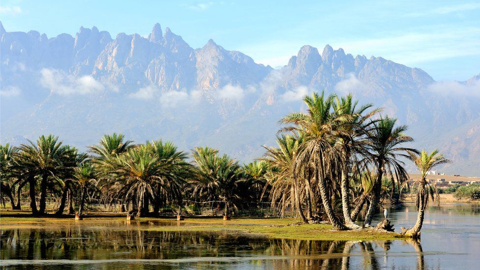 A majestic mountain range rises in the distance behind an oasis of palm trees on Socotra