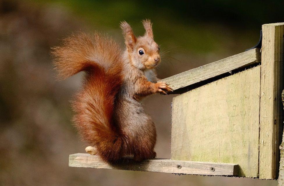 Guarding squirrel