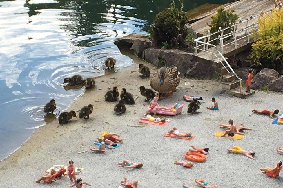 Ducks on the beach at Babbacombe Model Village