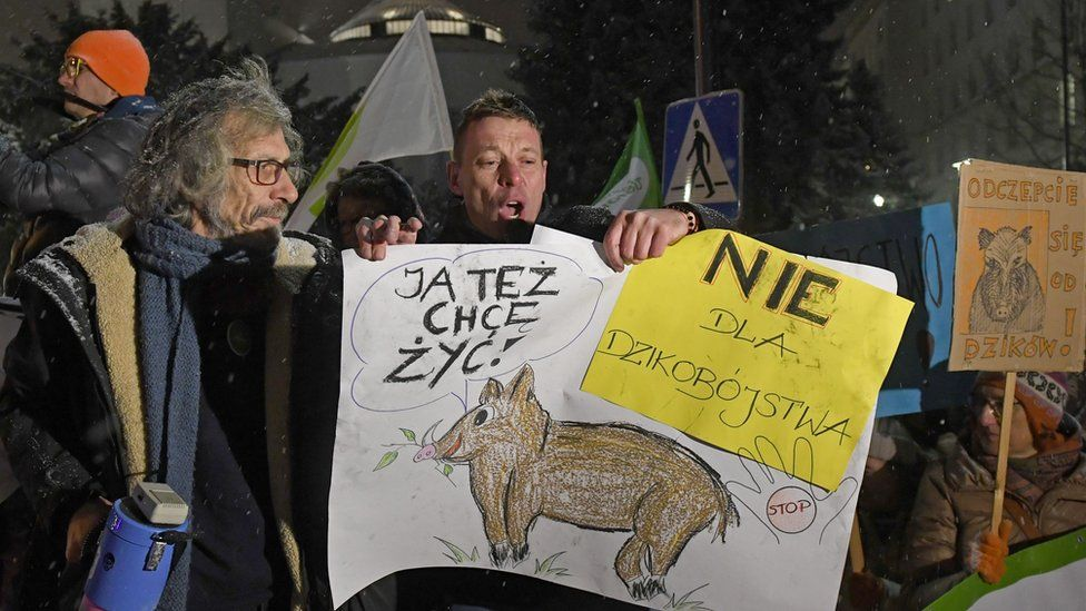 Anti-cull protesters holding drawings of boars in Warsaw