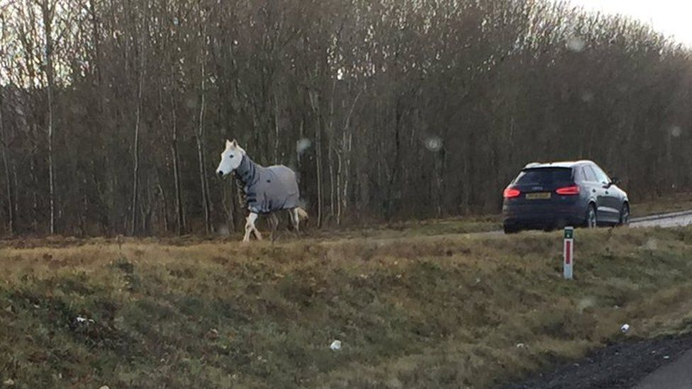 A loose horse on the A55