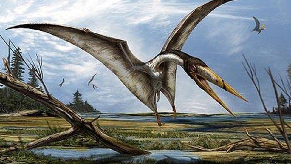 North African Alanqa pterosaur