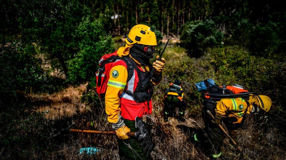 Firefighters in Portugal clear vegetation on the edge of a eucalyptus forest