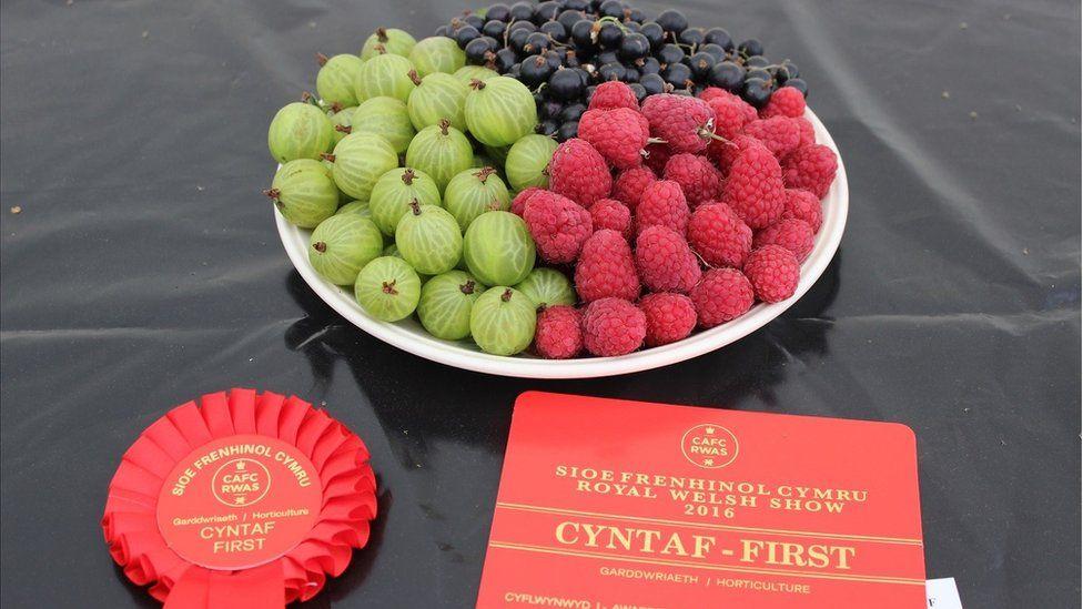 Ffrwythau ar blât // Fruit on a plate