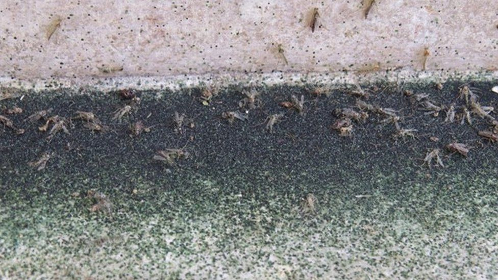 Bugs invading the Taj Mahal