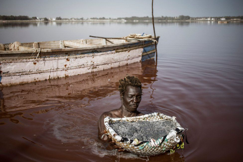 A man holds basket of salt whilst standing in a large pink lake