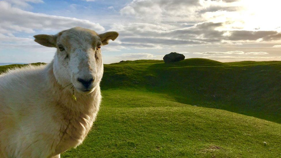 Sheep at the Blorenge near Abergavenny