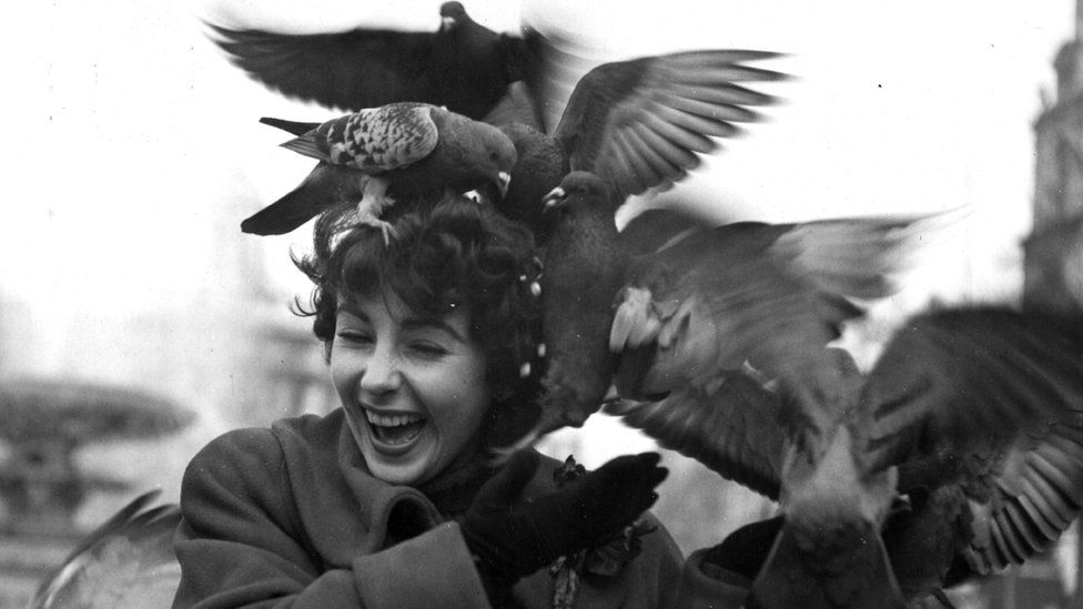 A laughing Elizabeth Taylor turns her head as some half dozen pigeons flock about her hair trying to consume feed while she tries to wave them off