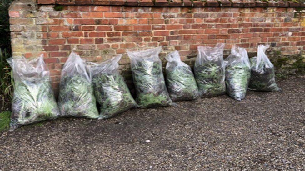 Snowdrops stolen from Walsingham Abbey, Norfolk