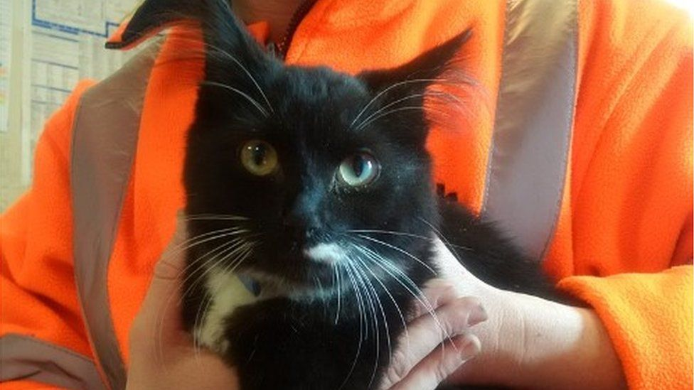 'Miracle' cat found in sofa at Slough waste centre