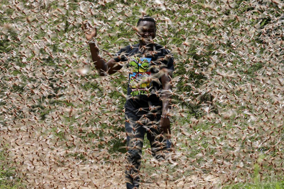 A man runs through a desert locust swarm